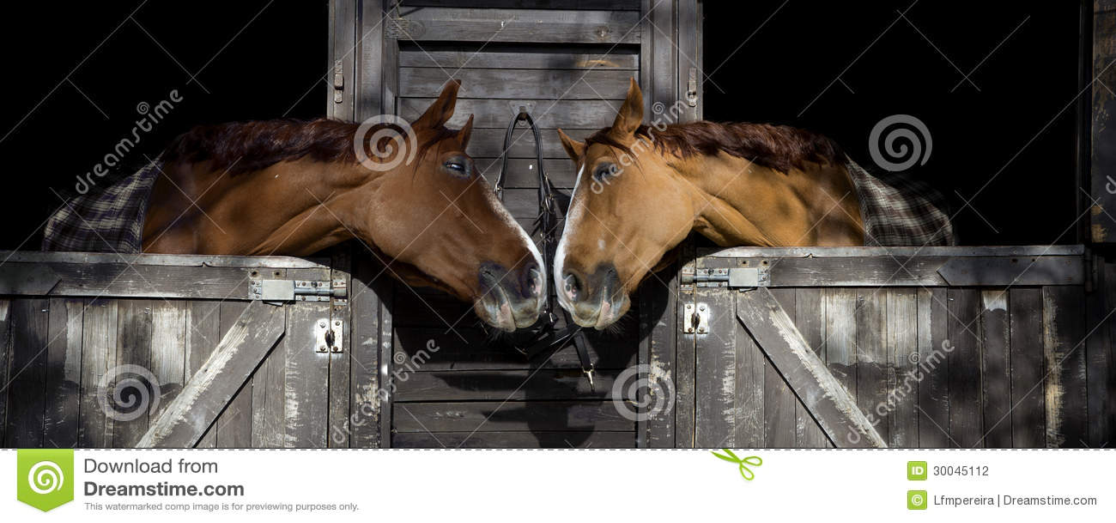 Paarden in liefde