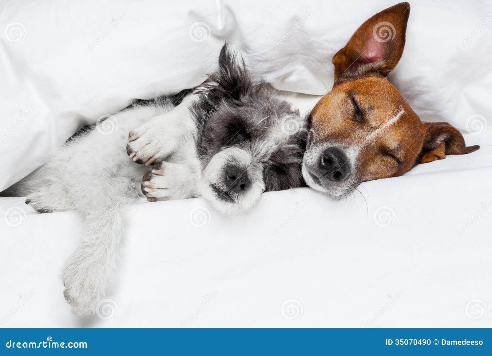 Twee honden in liefde