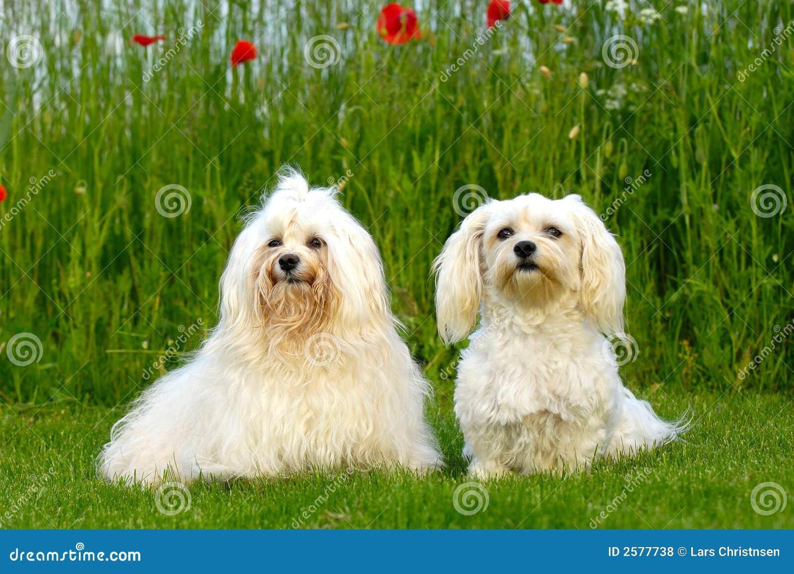 Twee honden in natur