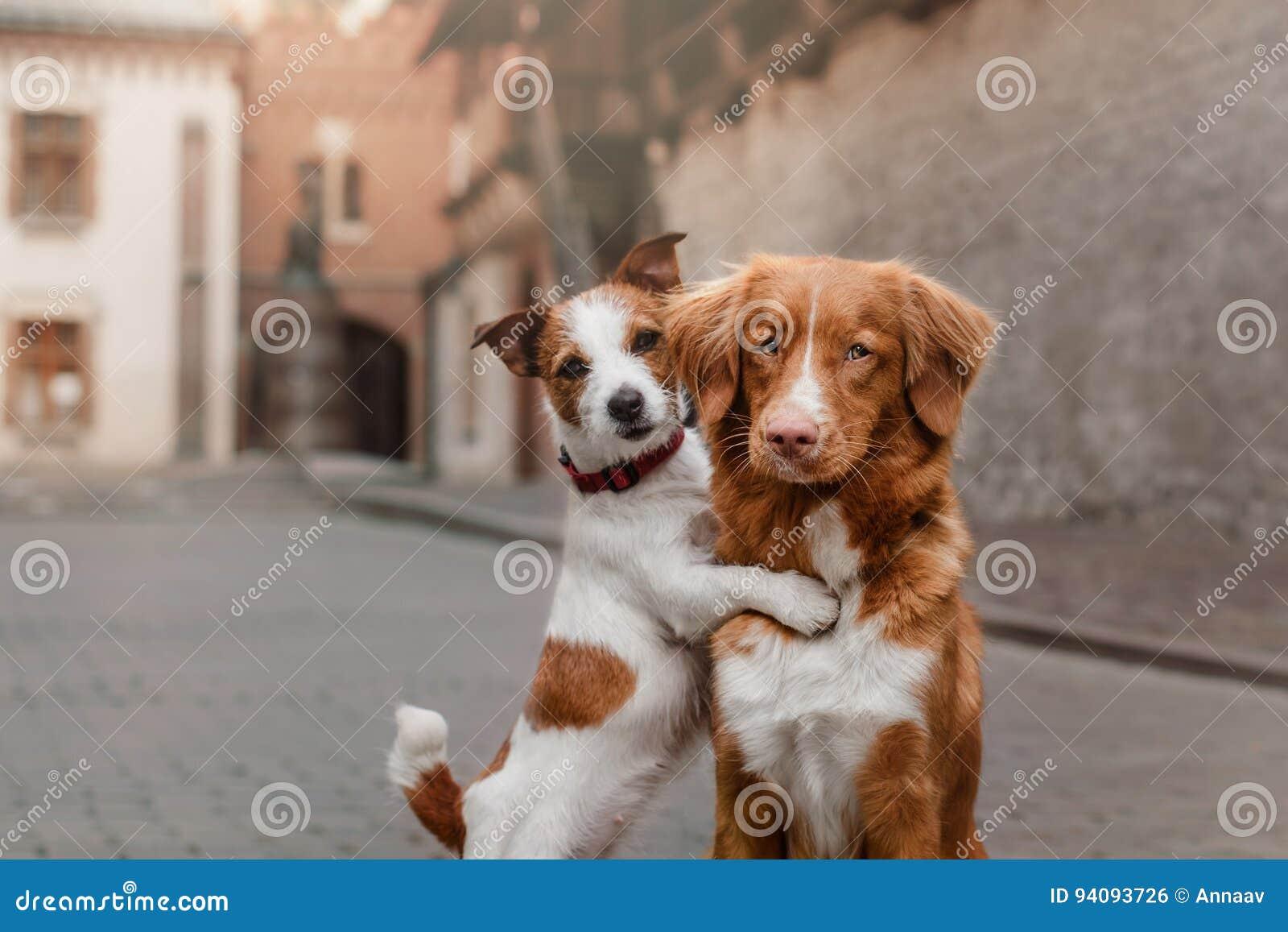 Twee honden in oude stad