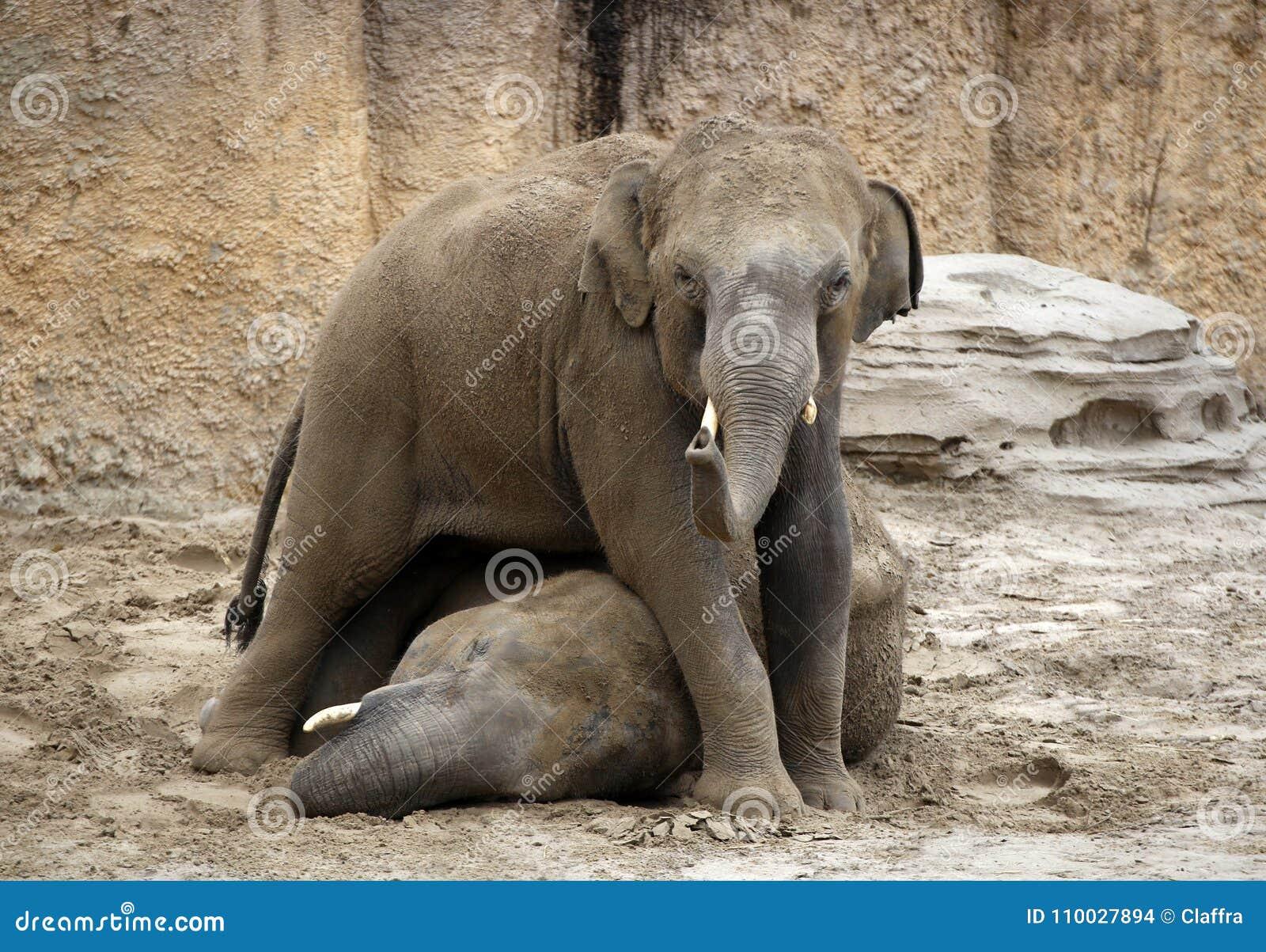 Twee jonge olifanten