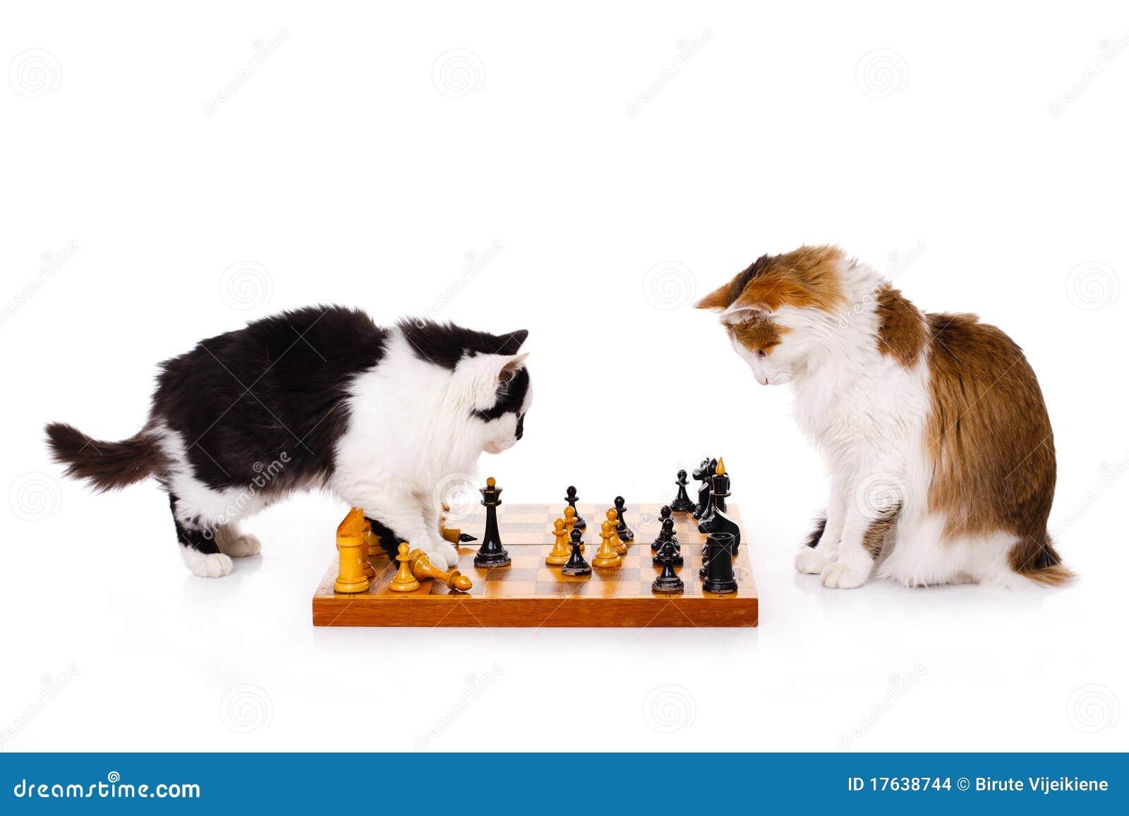 kostenlos schach spielen download