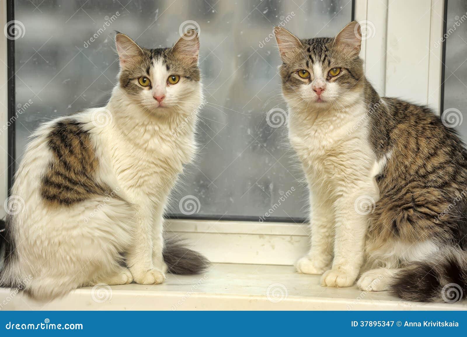 Twee katten op de vensterbank