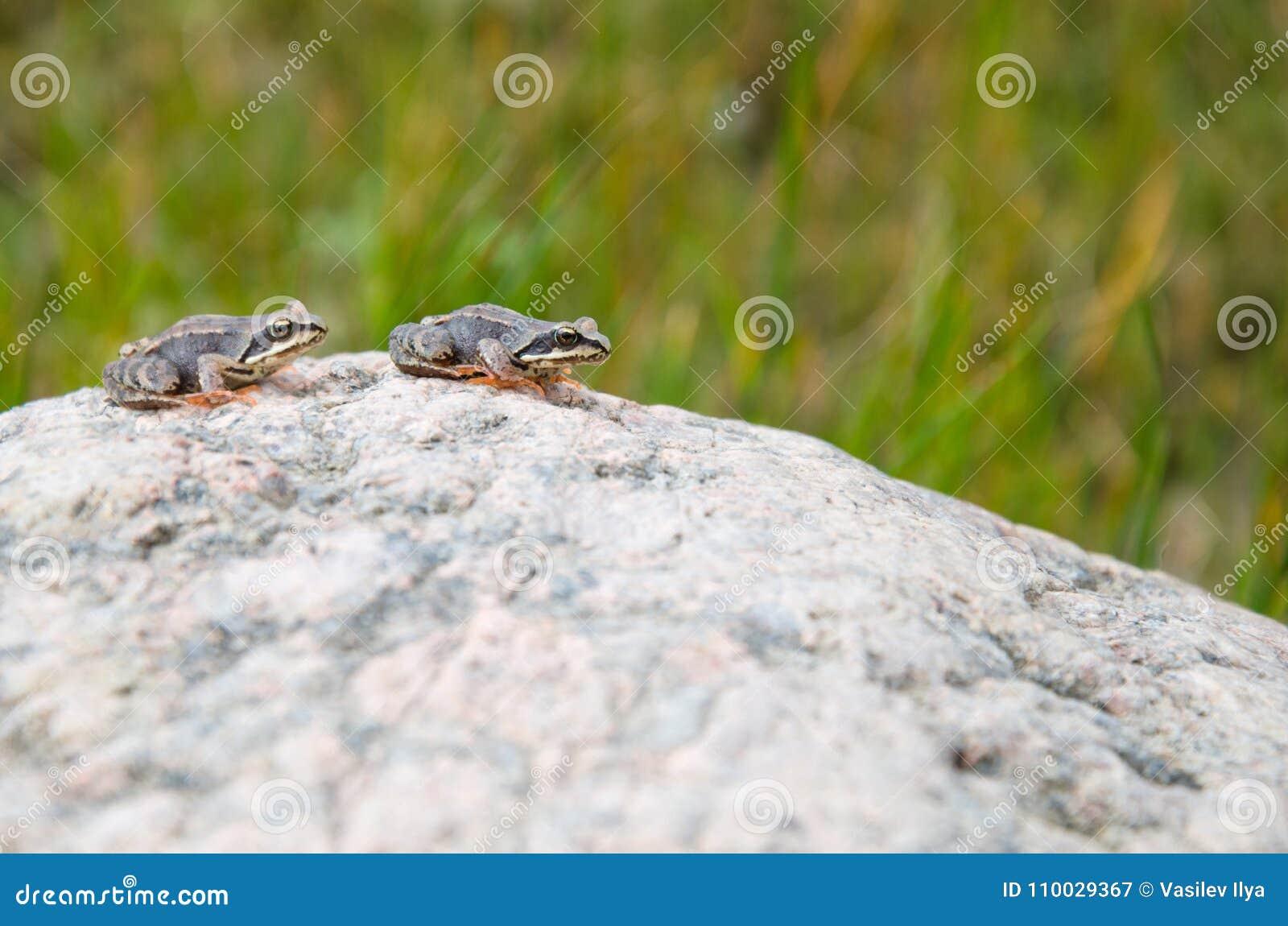 Twee kikkerssprong voor granietsteen