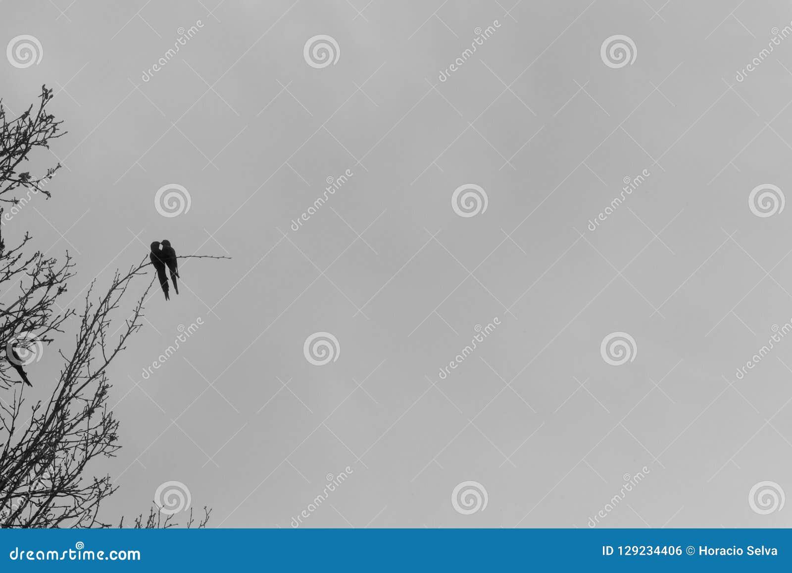 Twee kleine papegaaien in liefde bij het uiteinde van een tak