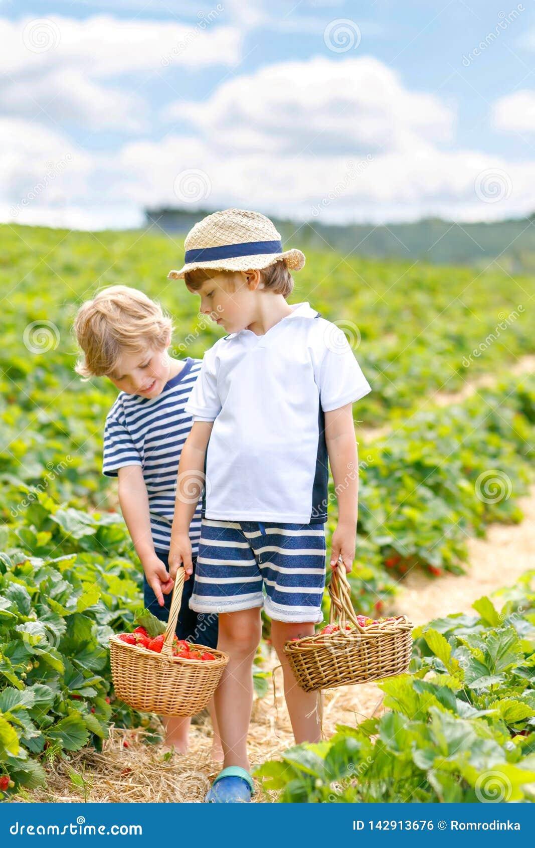 Twee kleine sibling jonge geitjesjongens die pret op aardbeilandbouwbedrijf hebben in de zomer Kinderen, leuke tweelingen die gez
