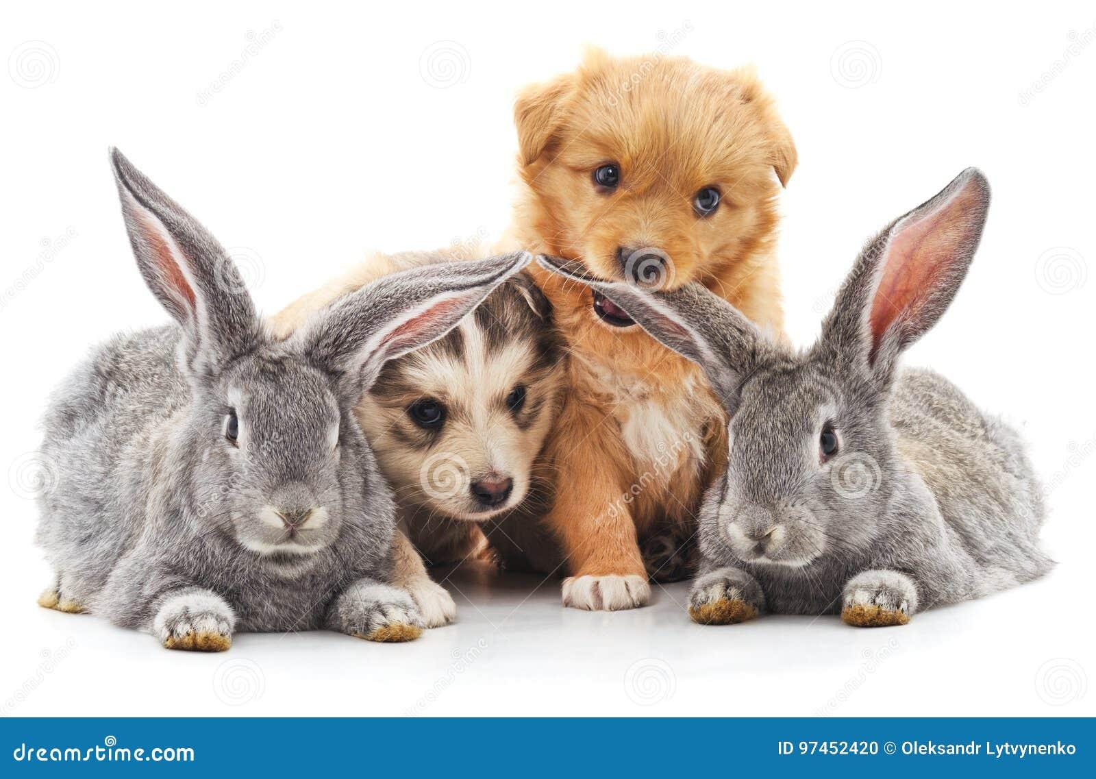 Twee konijnen en twee puppy