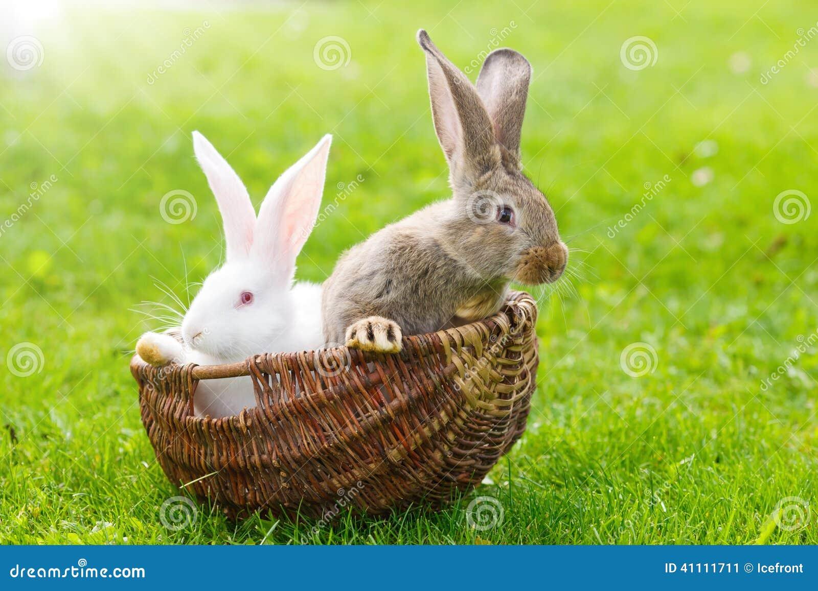 Twee konijnen in rieten mand