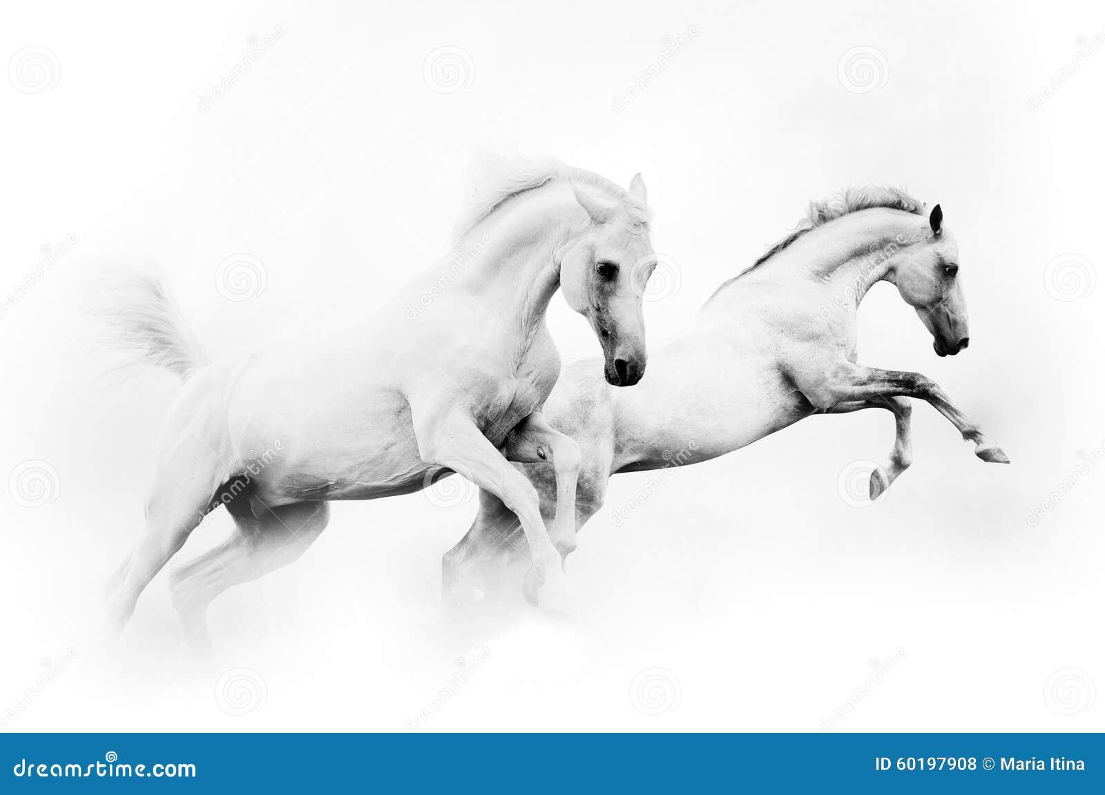 Twee krachtige witte paarden