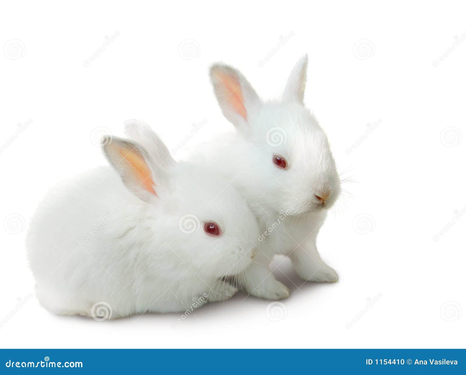 Twee leuke witte geïsoleerdei babykonijnen.