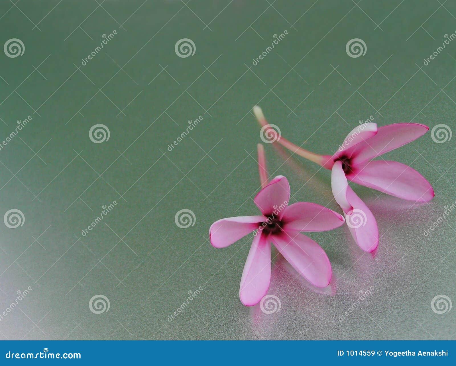 Twee lichtrose bloemen op een het glanzen oppervlakte