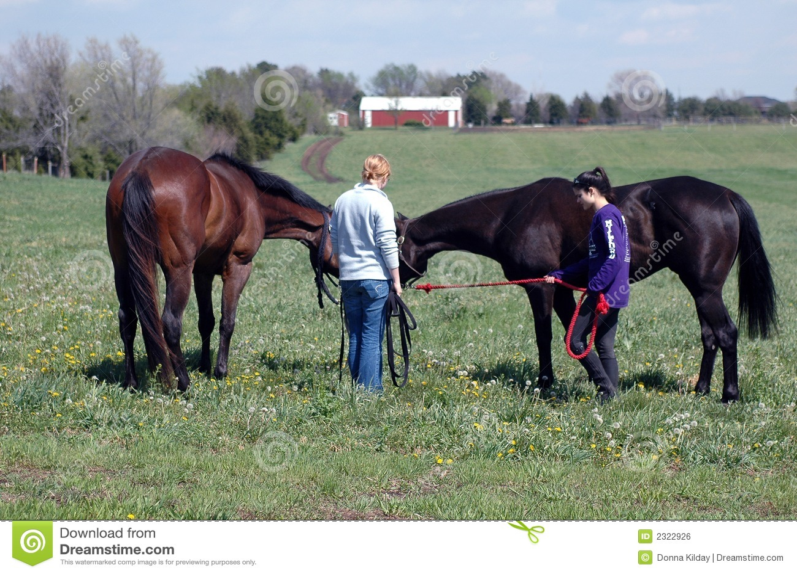 Twee Meisjes en Twee Paarden