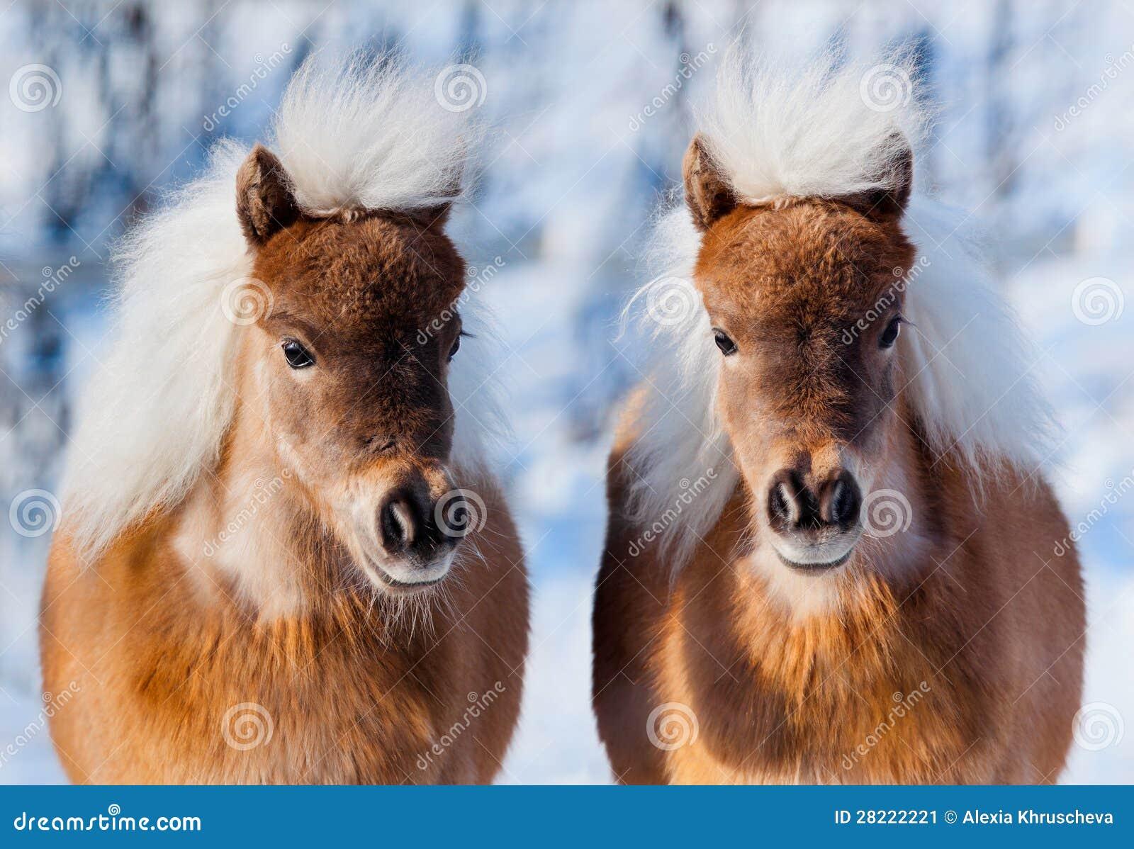 twee paardenhoofden in de winterbos stock afbeelding afbeelding bestaande uit koude status. Black Bedroom Furniture Sets. Home Design Ideas