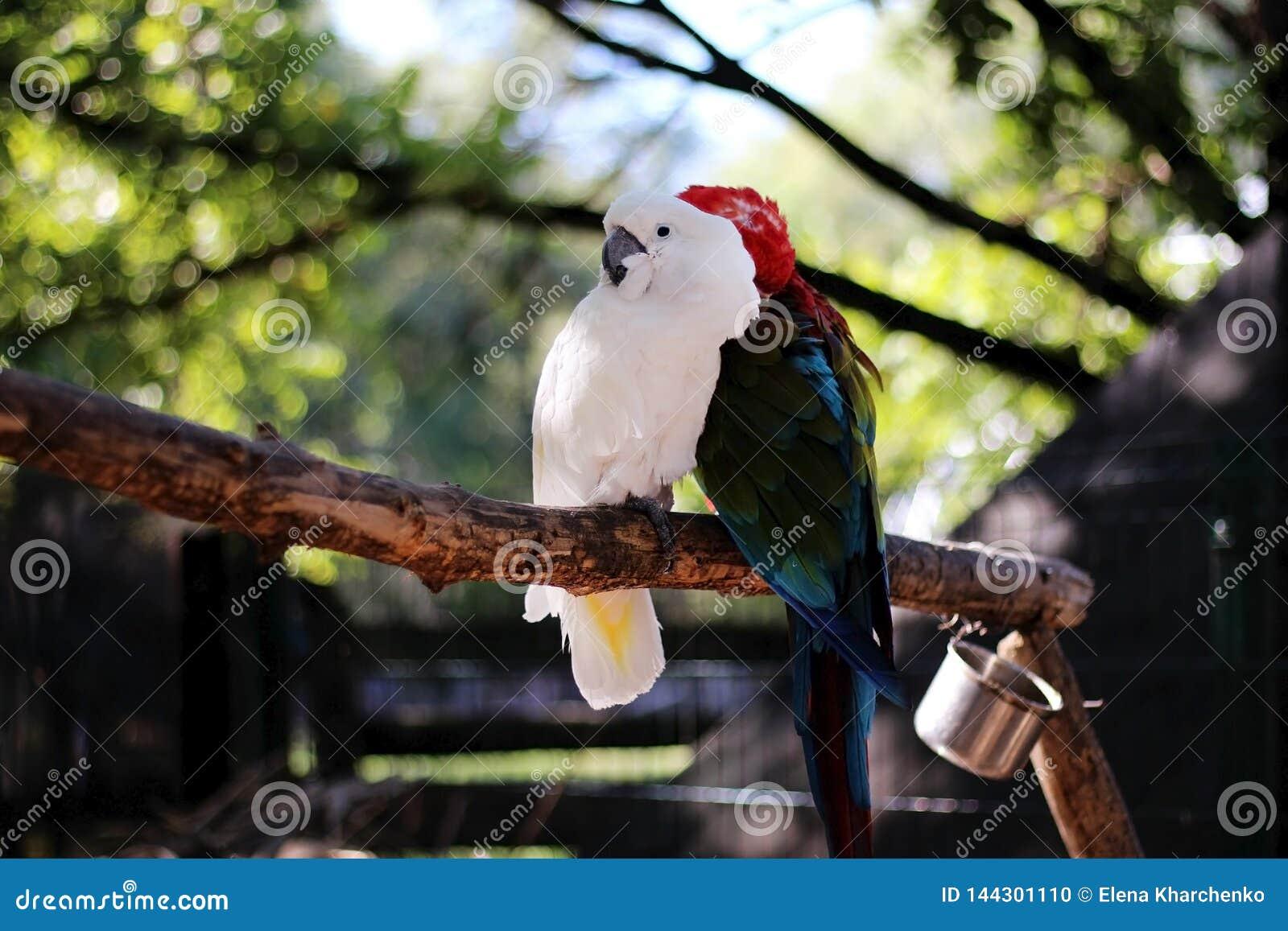 Twee papegaaien zitten op een tak in de dierentuin