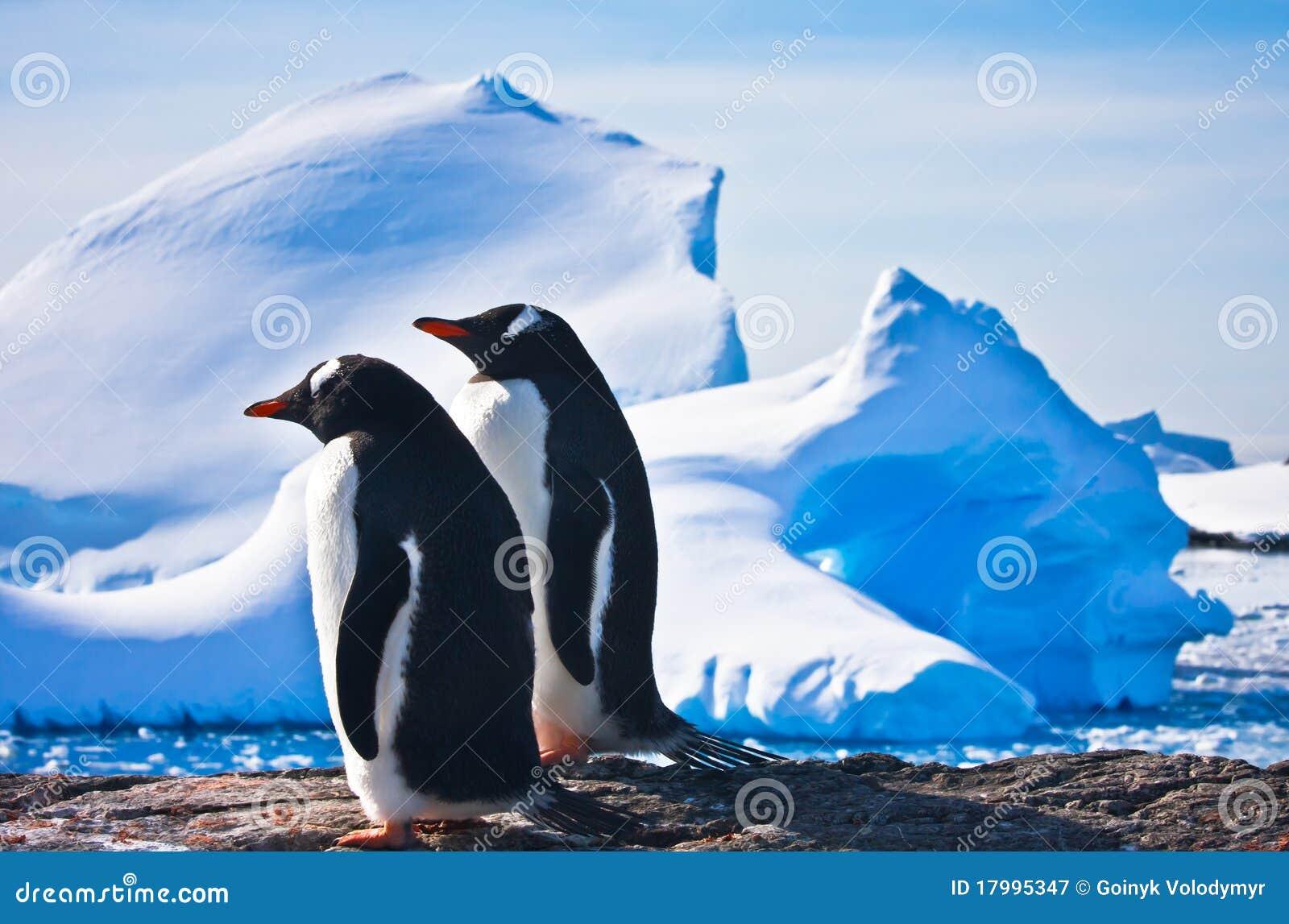 Twee pinguïnen
