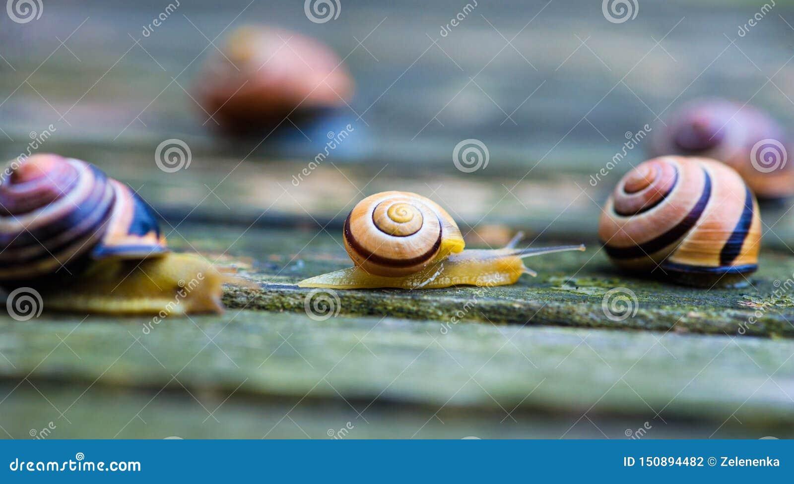Twee slakken die zich in tegenovergestelde richtingen, een oude houten oppervlakte bewegen