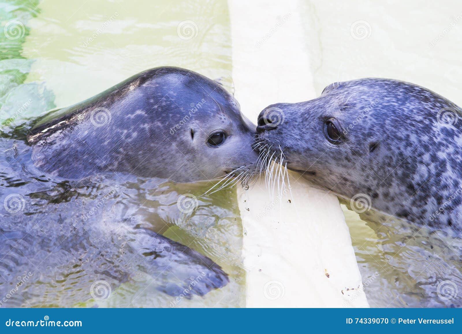 Twee verbindingen het kussen
