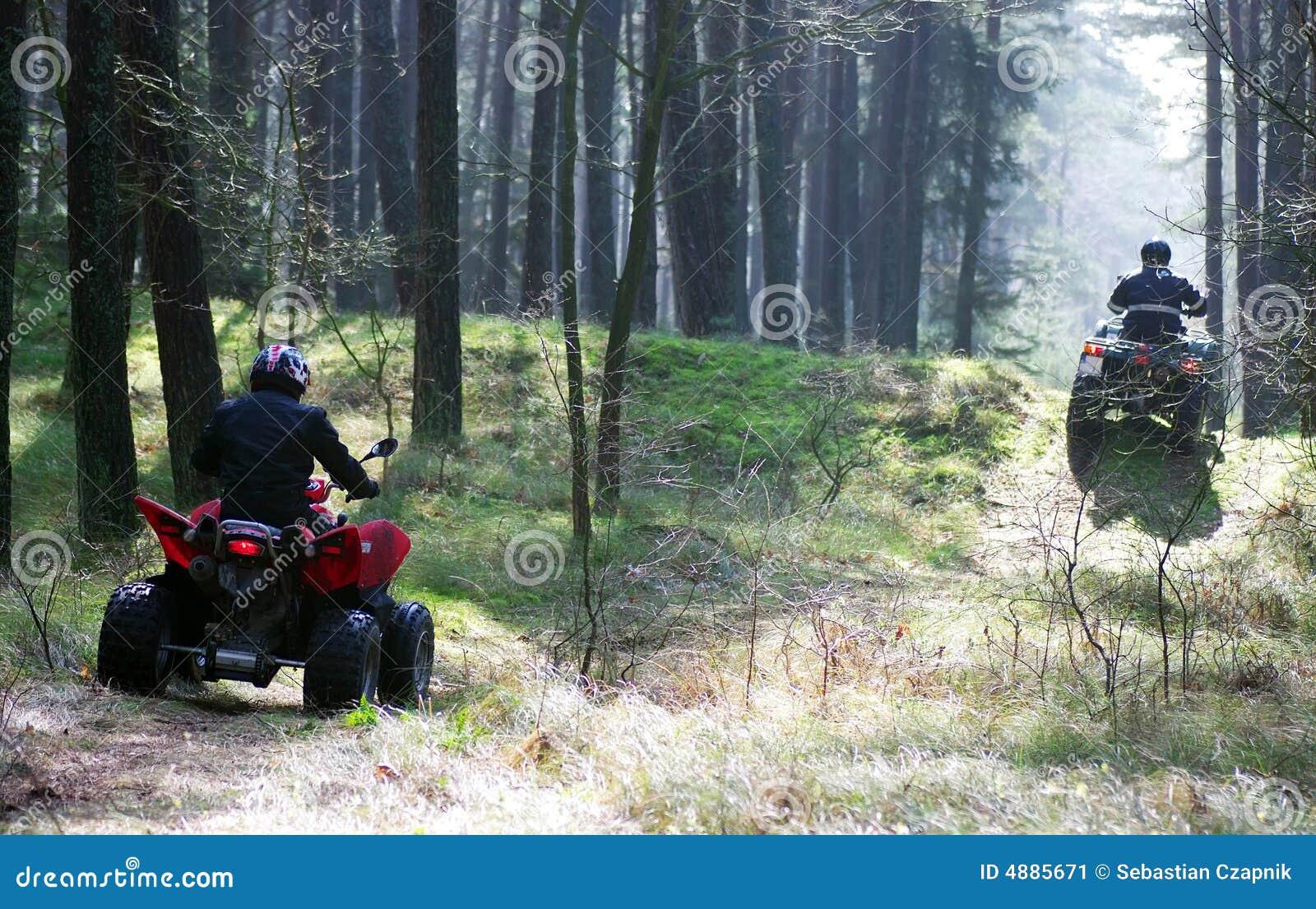 Twee vierlingen in bos