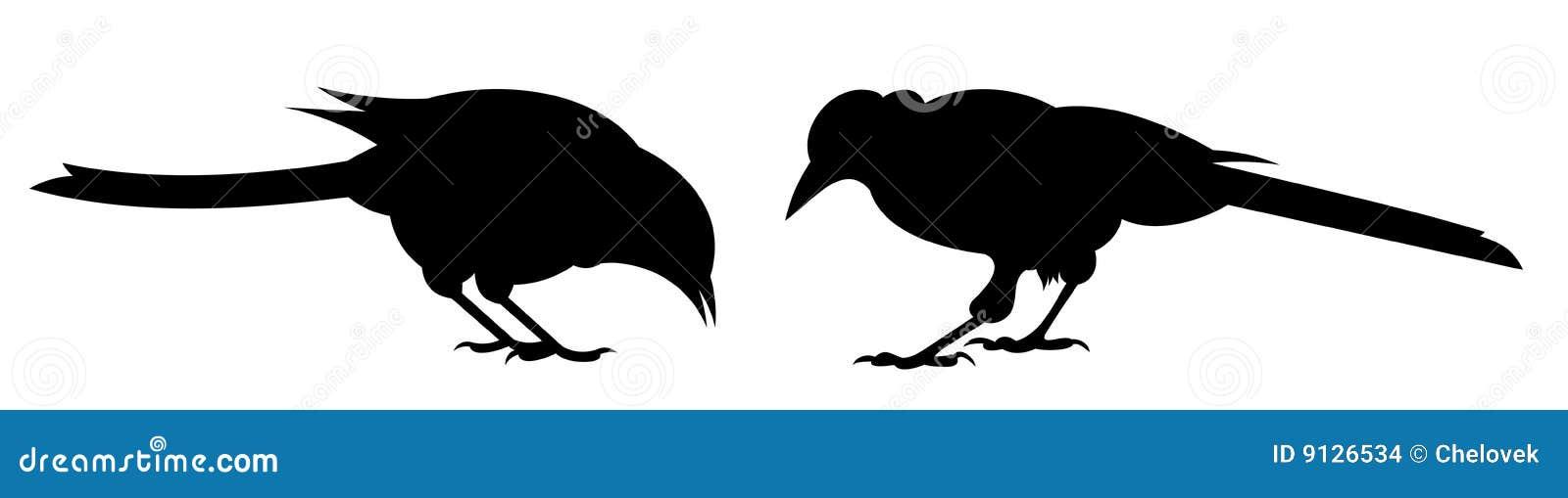 Twee vogels