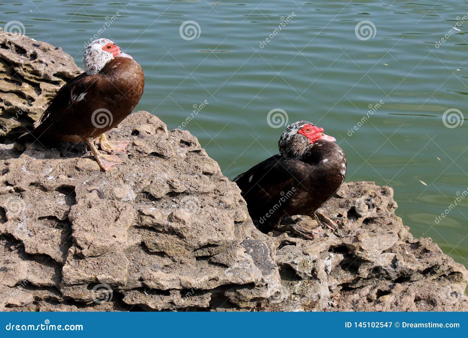Twee vogels op het meer