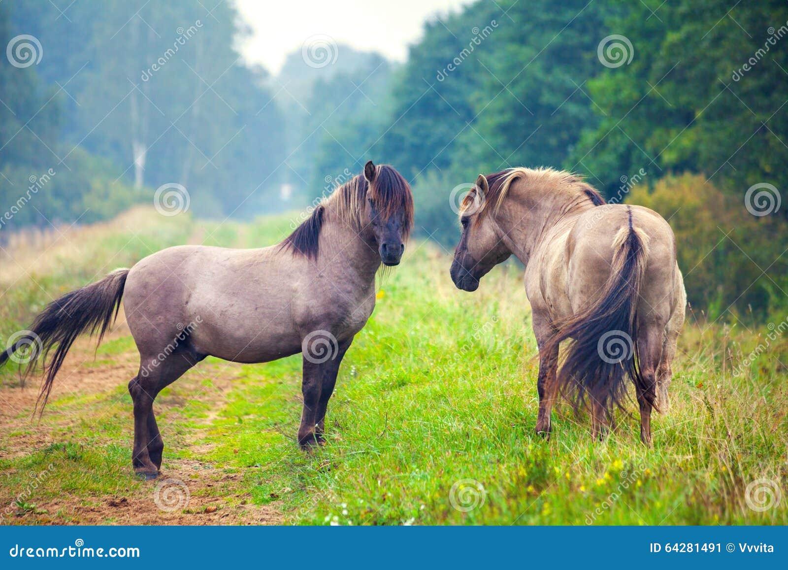 Twee wild paarden