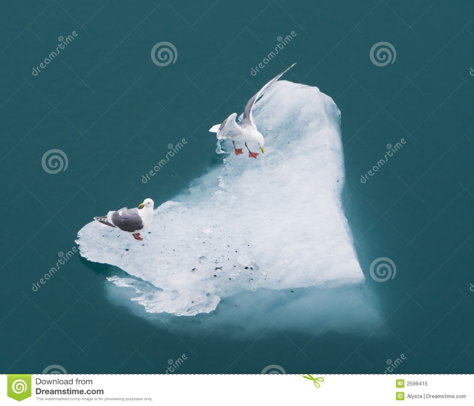 Twee Zeemeeuwen op een Ijsberg