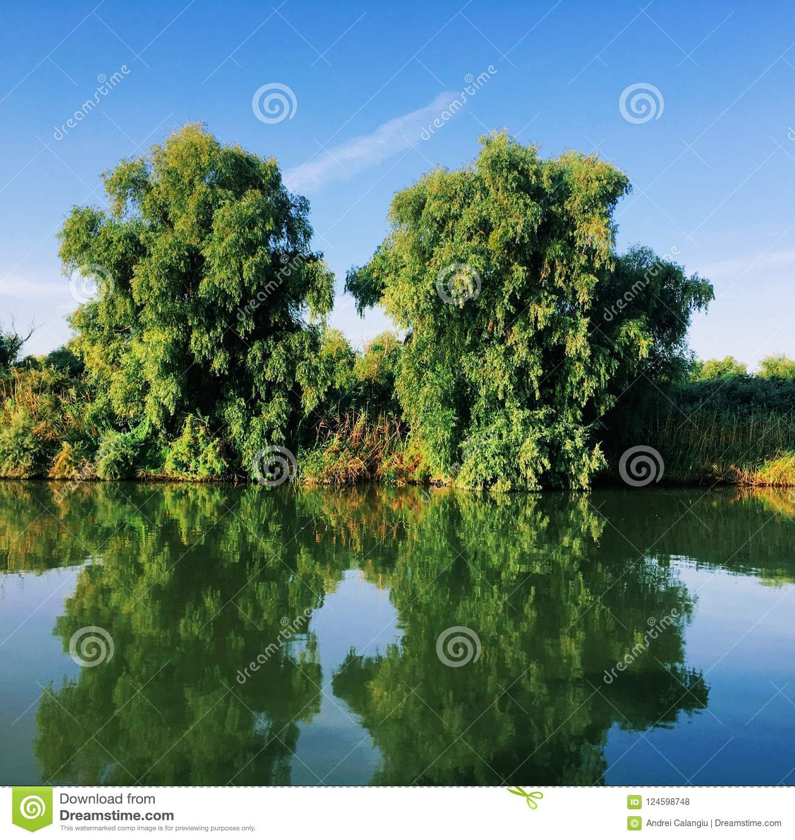 Tweelingbomen