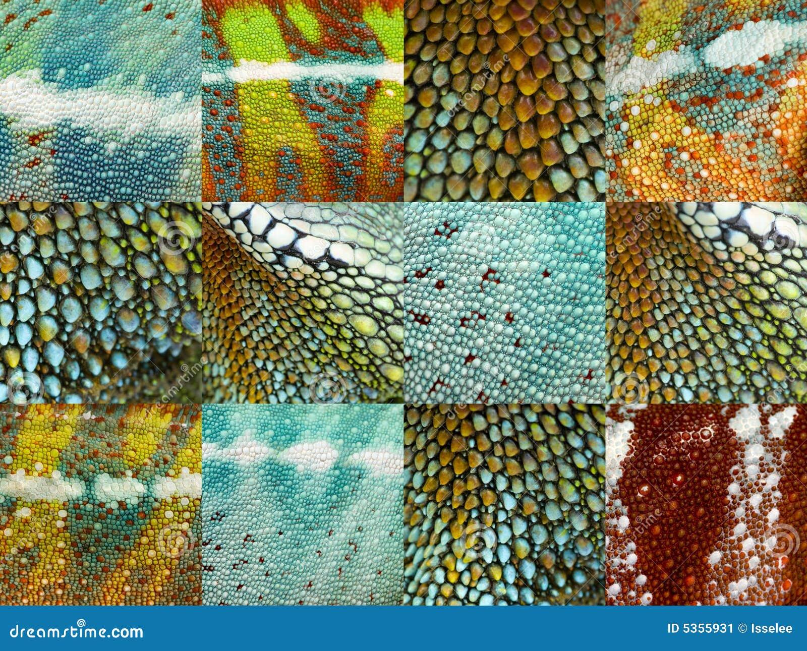 Twelve colorful reptile skins