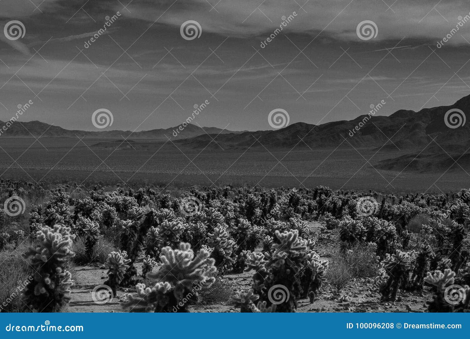 December at the desert