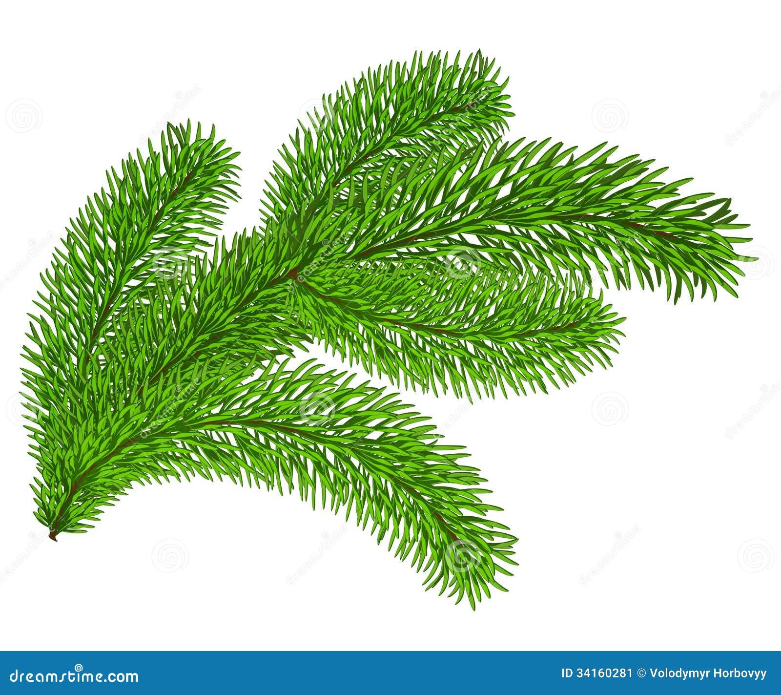Twig of evergre...