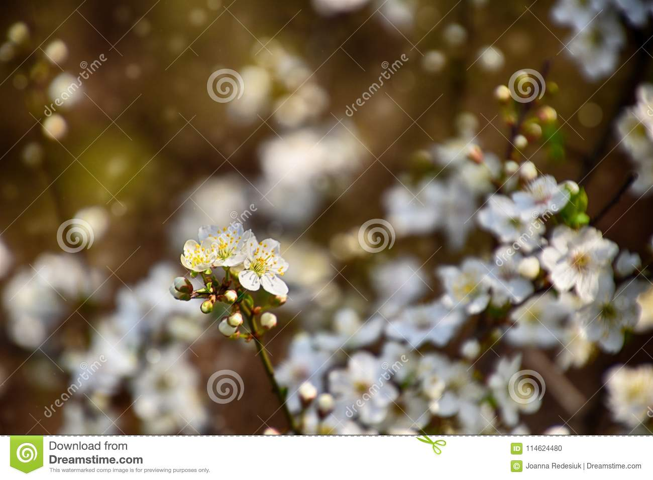 Twig Of A Fruit Tree Showered With Small Delicate White Flowers