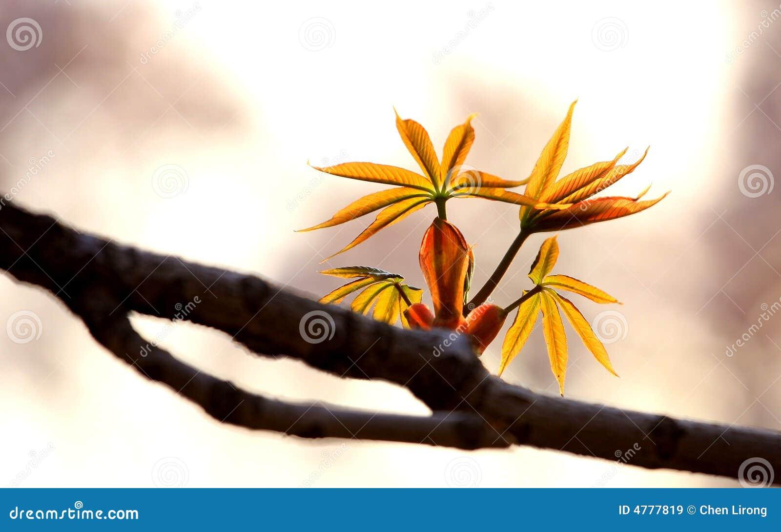 Twig_on_spring_tree