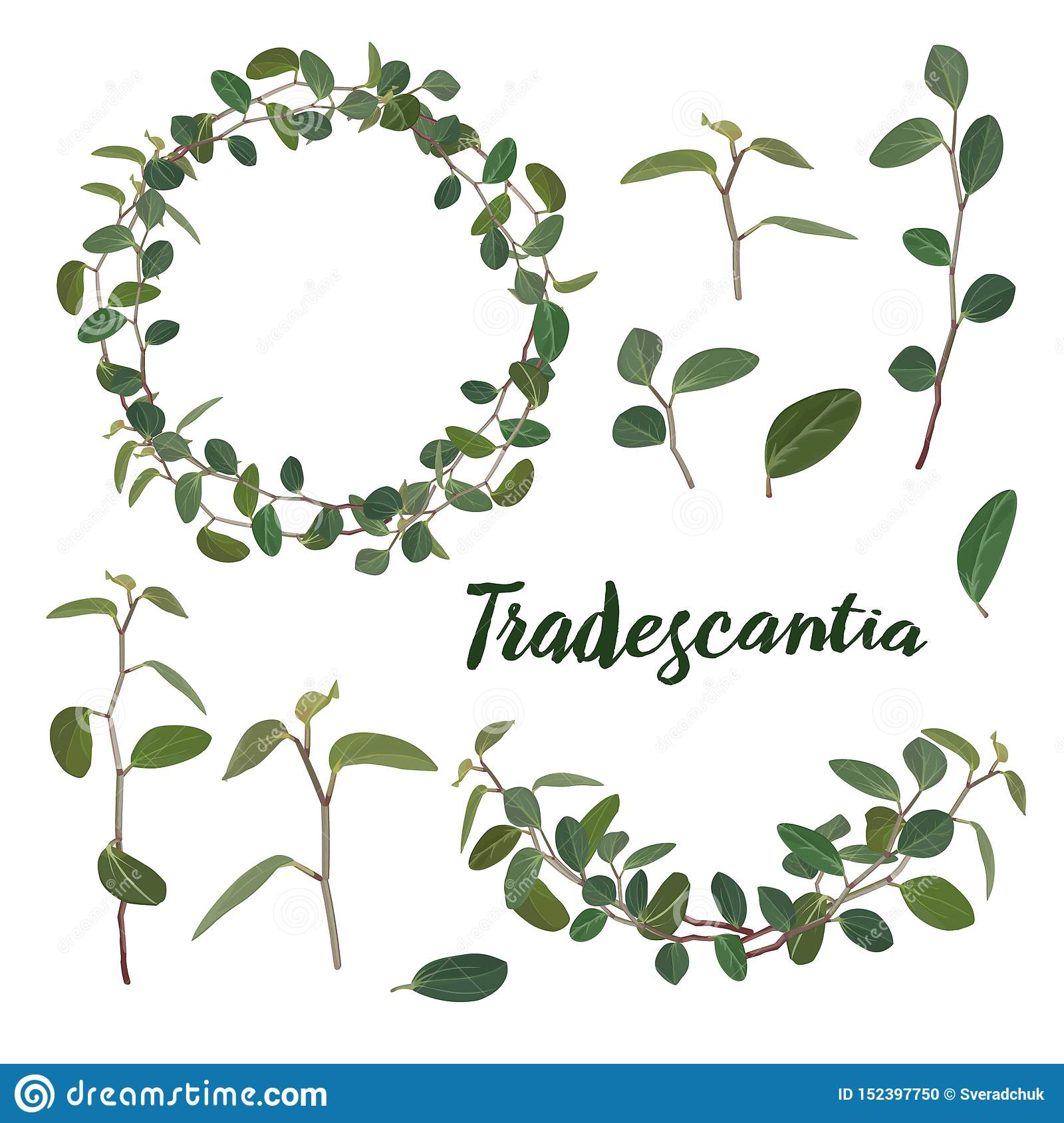 Twigs and leaves of the tradiscation in a wreath and a garland on a white background. Vector.