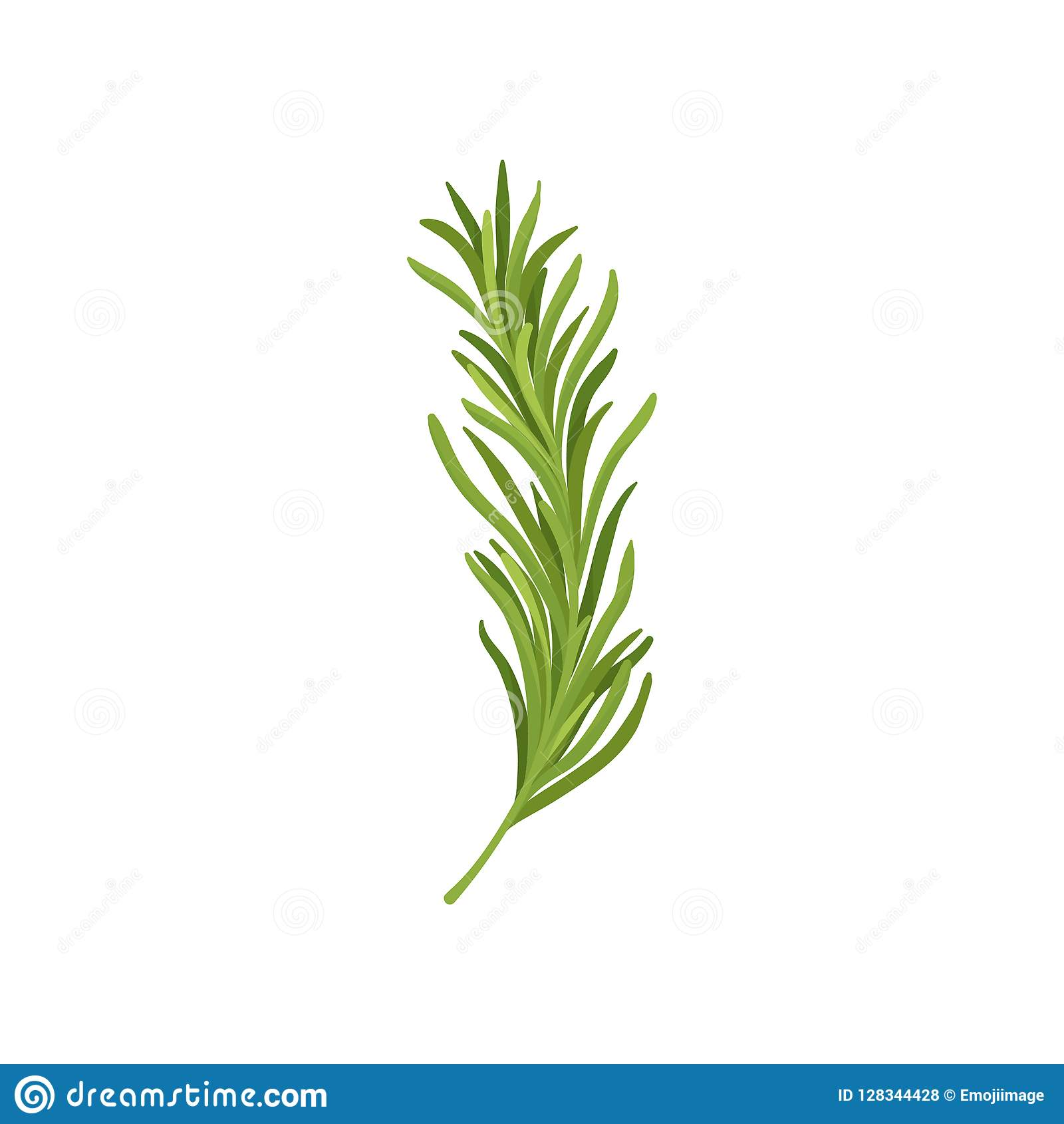 Twijg van groene rozemarijn Vers die kruid in culinair wordt gebruikt Organisch ingrediënt voor smaakstofschotels Vlak vectorontw
