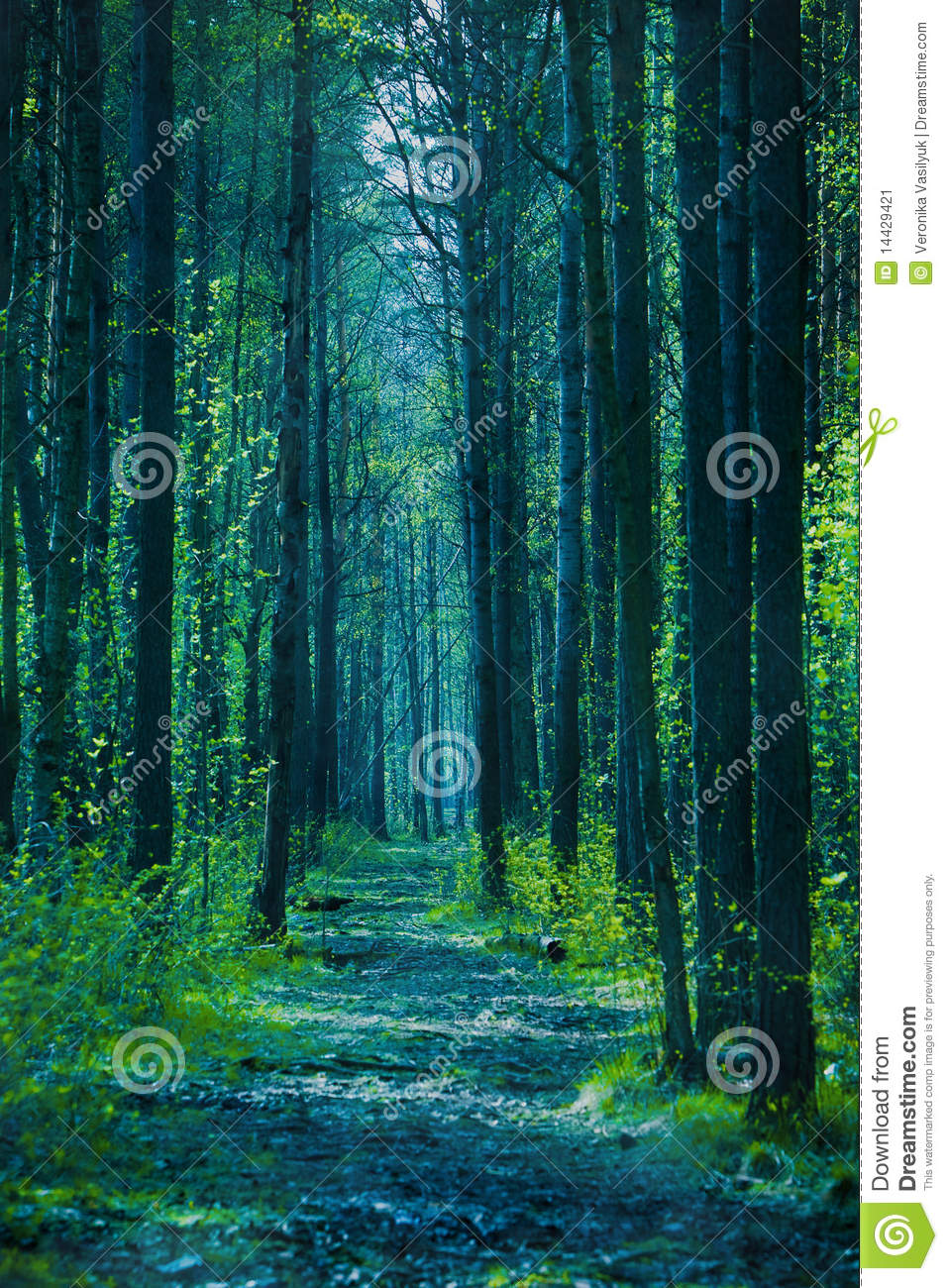 Twilight Forest Stock Image Image Of Forest Mist Nobody