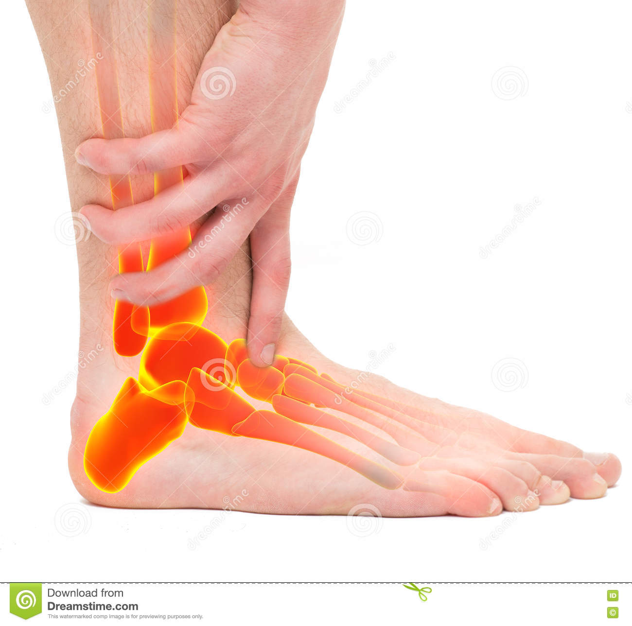 Twisted Ankle - Man Holding Ankle - Anatomy Male Stock Photo - Image ...