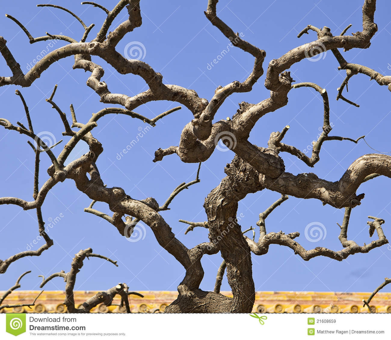 Twisted Tree Branches Stock Image Image Of Tiles Bare
