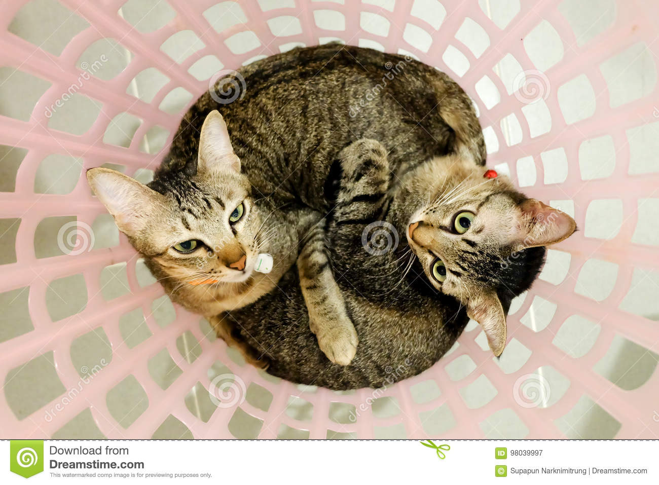 Image result for adorable cats
