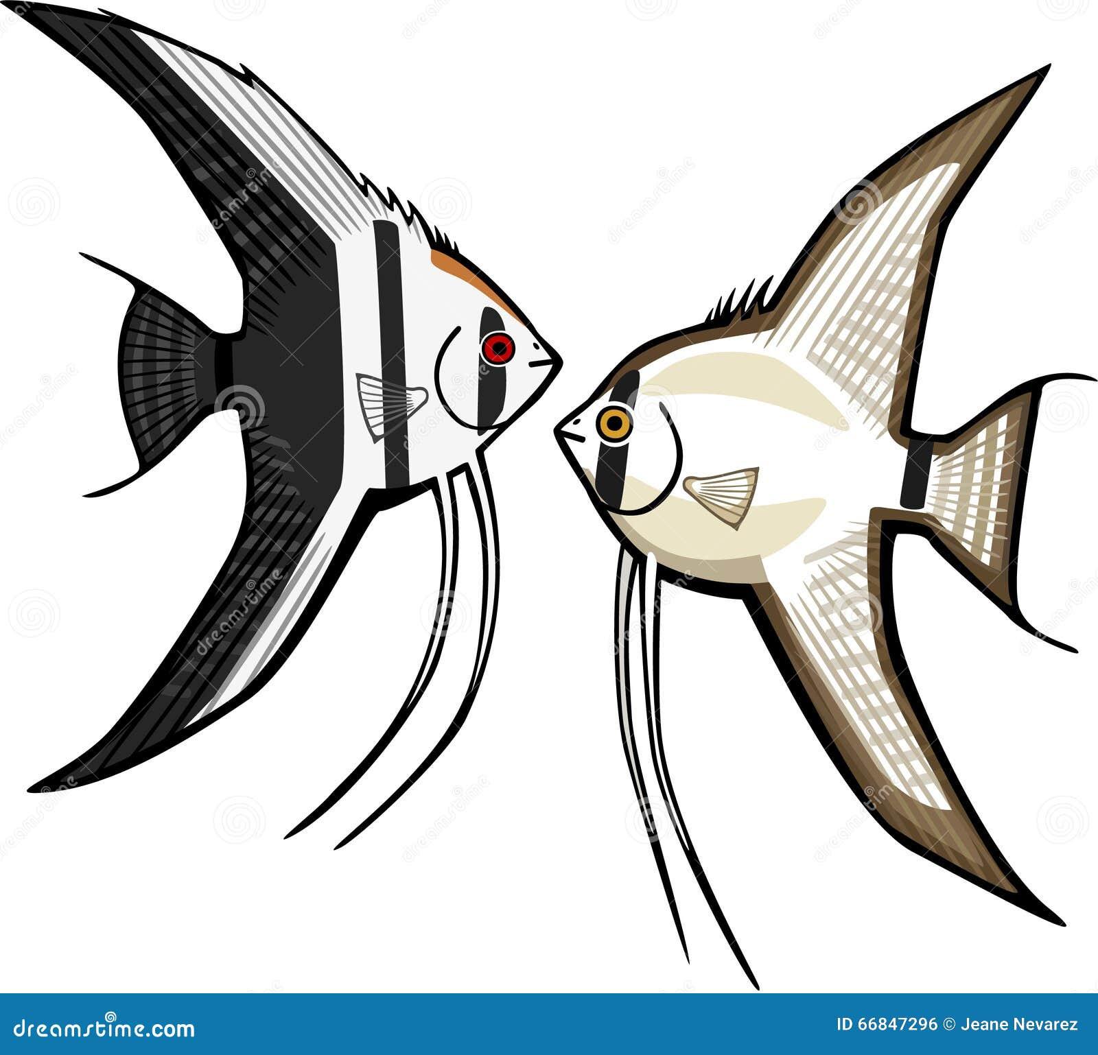 two angelfish stock vector image 66847296