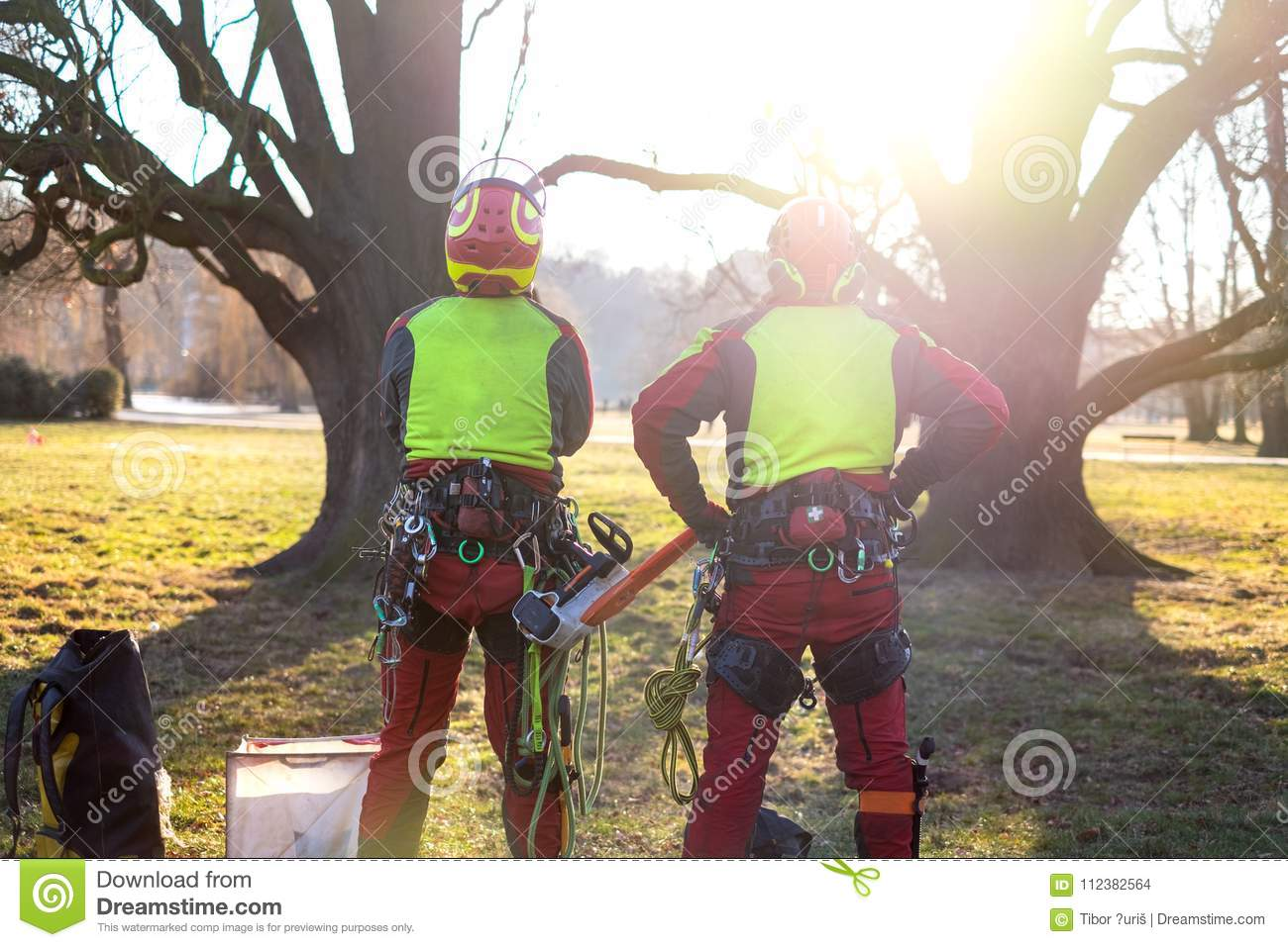 Two arborist men standing against two big trees. The worker with helmet working at height on the trees. Lumberjack working with ch