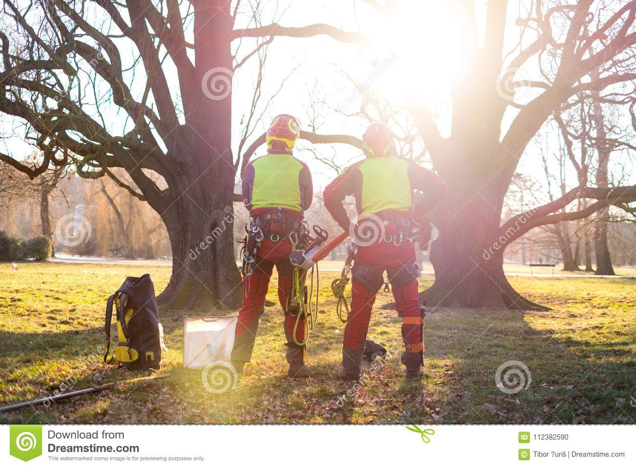 Two Arborist Men Standing Against Two Big Trees  The Worker