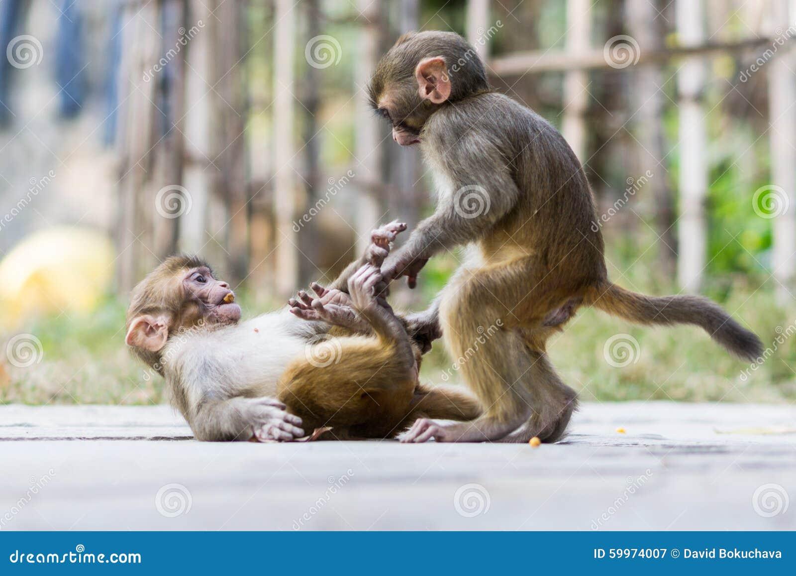 Two baby monkeys