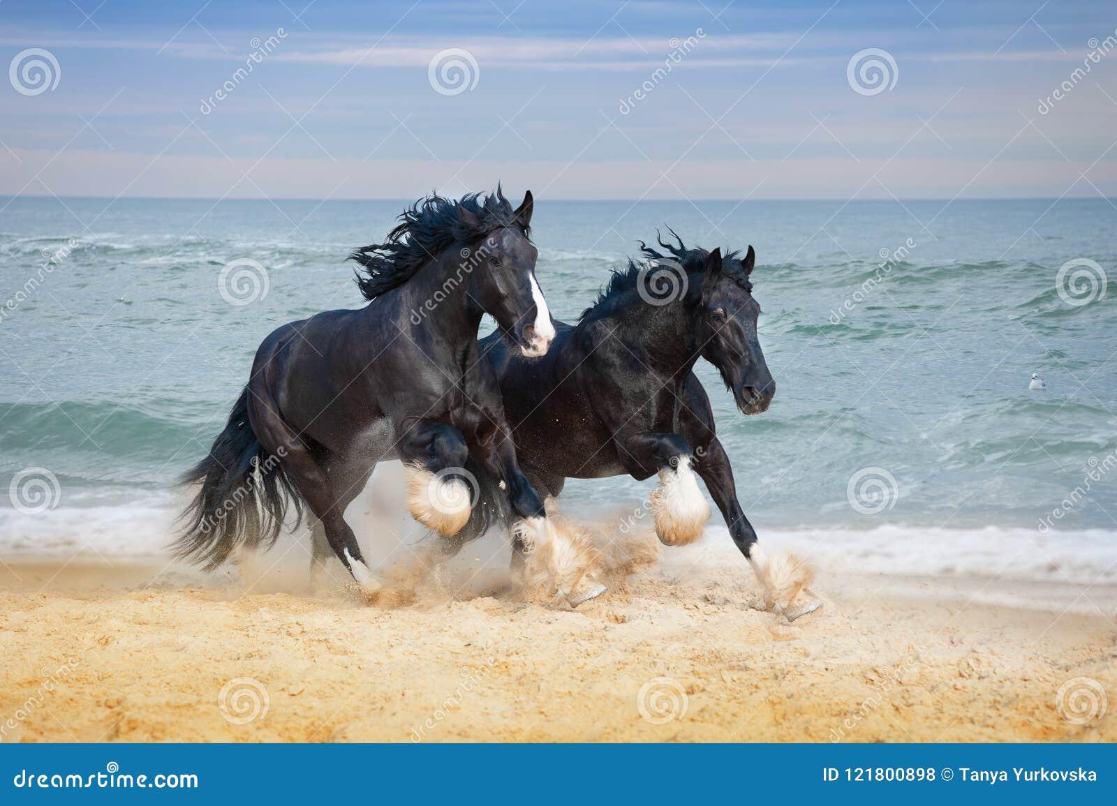 Two beautiful big horses breed Shire