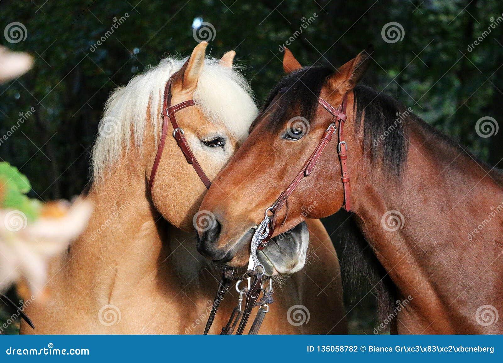 Lovely cuddling horses