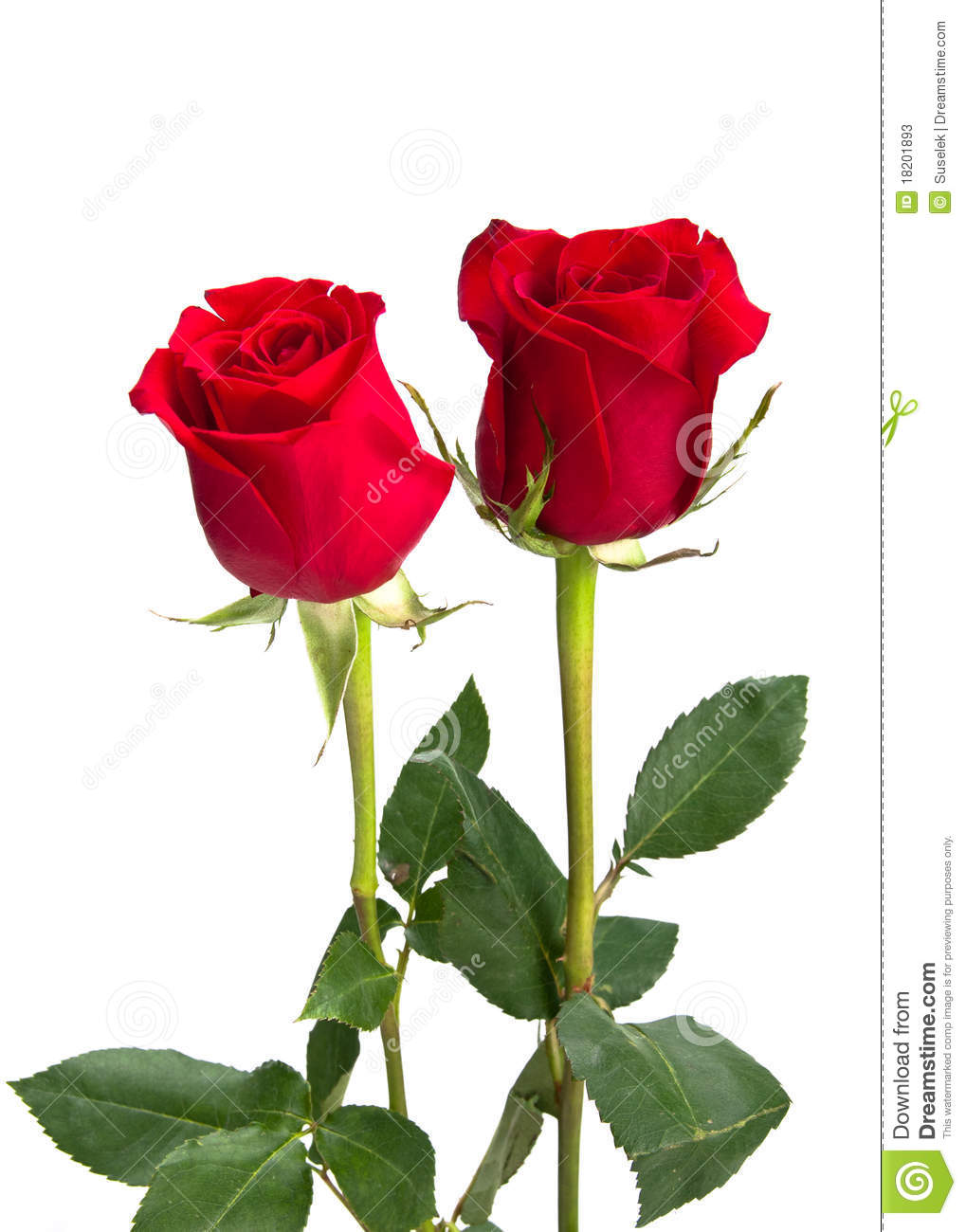... Red Roses On Isolating Background Stock Photos - Image: 18201893