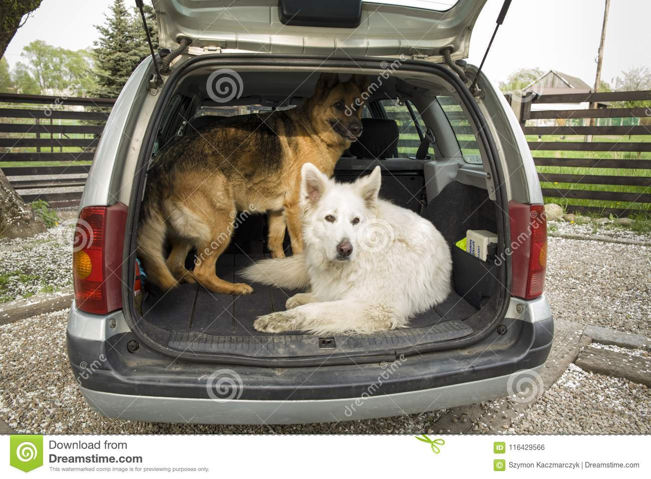 Two Big Dogs In The Car Travel With A Dog Trunk