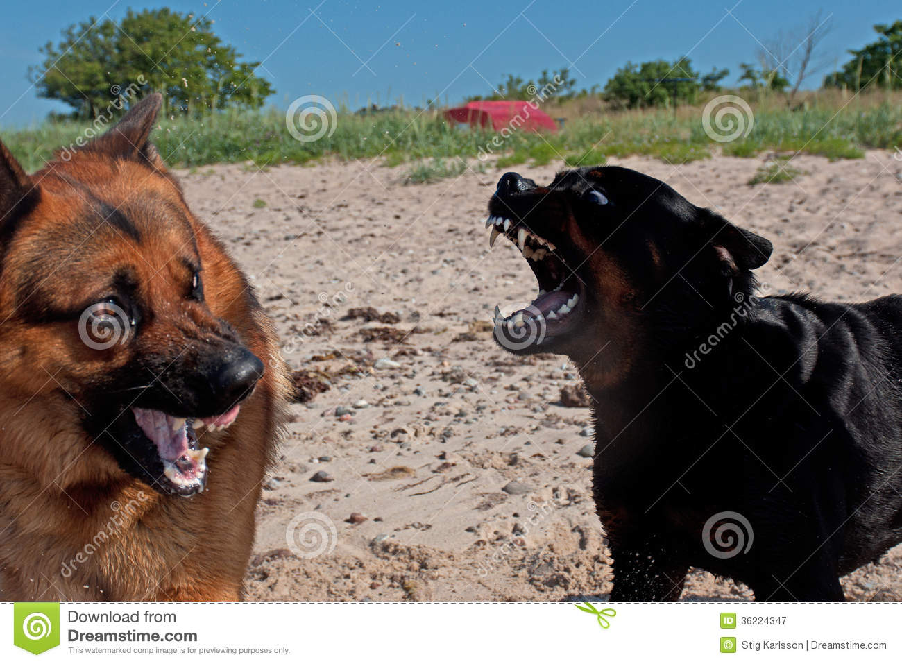 Rottweiler and German ...