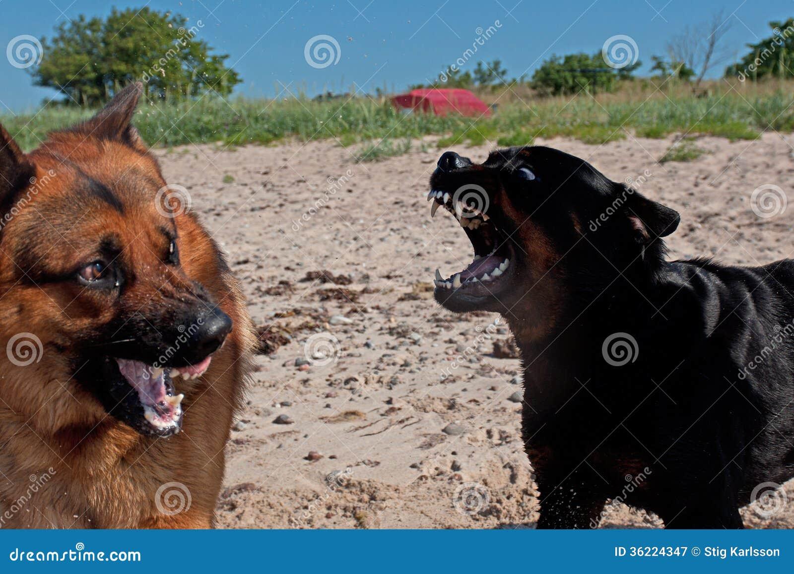 When A Dog Shows His Teeth