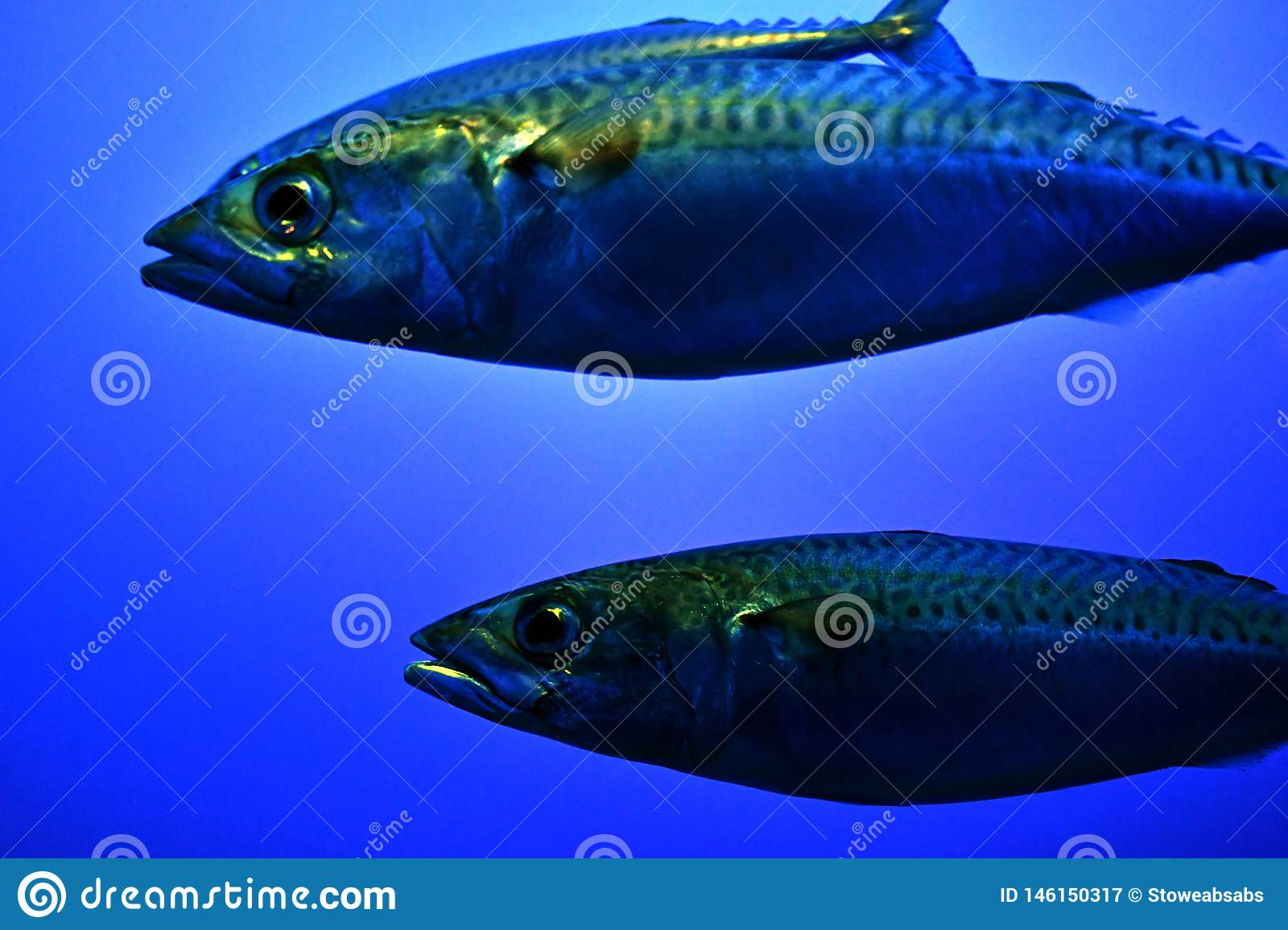Two big fish in the ocean