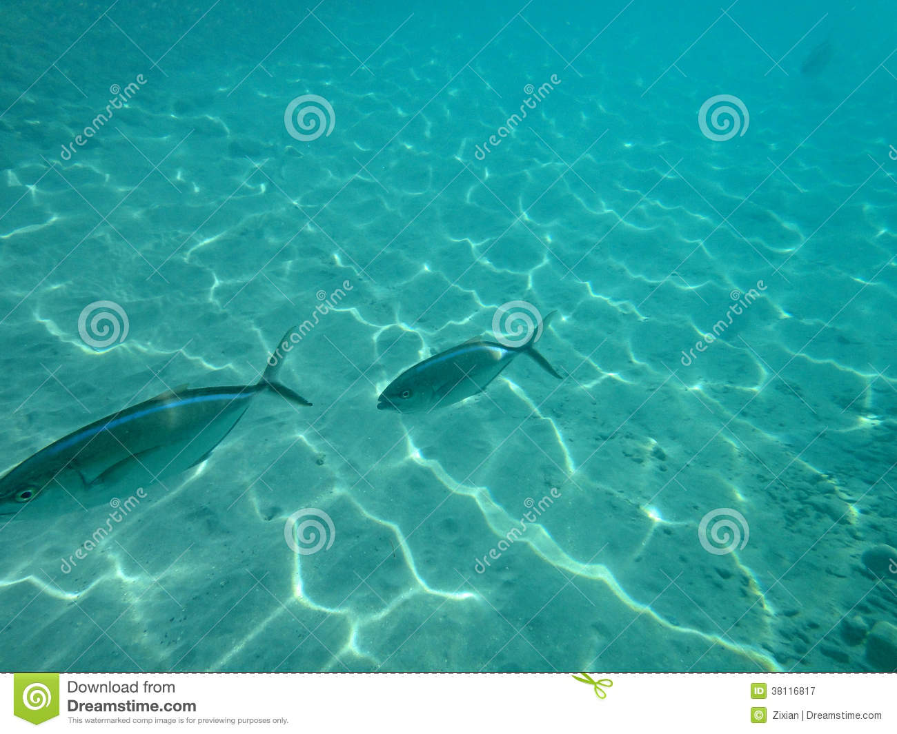 Two big fish royalty free stock photography image 38116817 for Dream of fish swimming